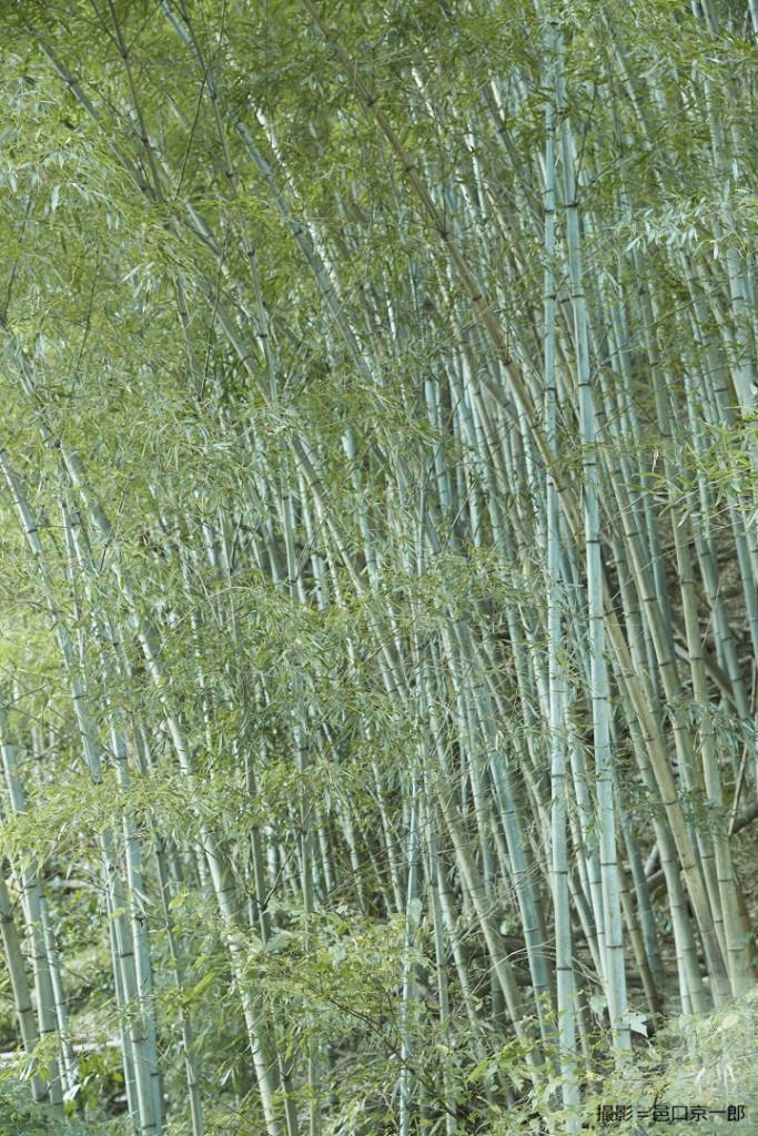 山小屋の裏の竹林