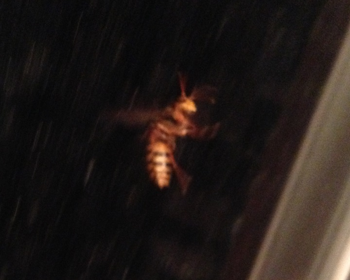 またハチが