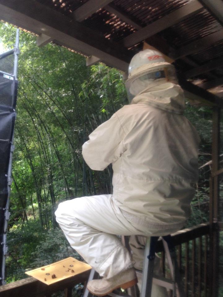 防護服着用でスズメバチを駆除する様子