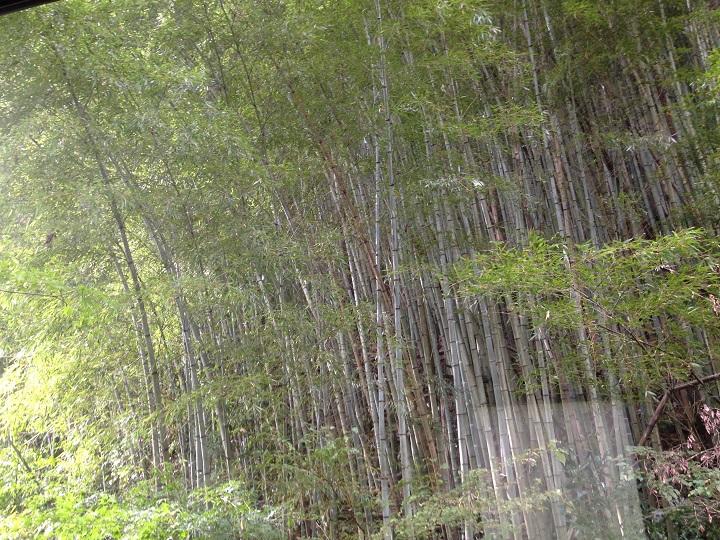 窓から竹林を臨む