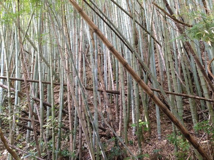倒れかかった竹