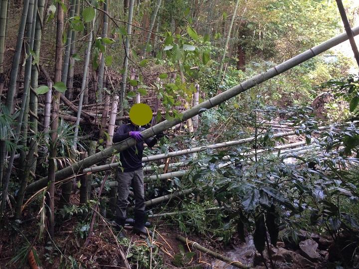 竹を切っているところ