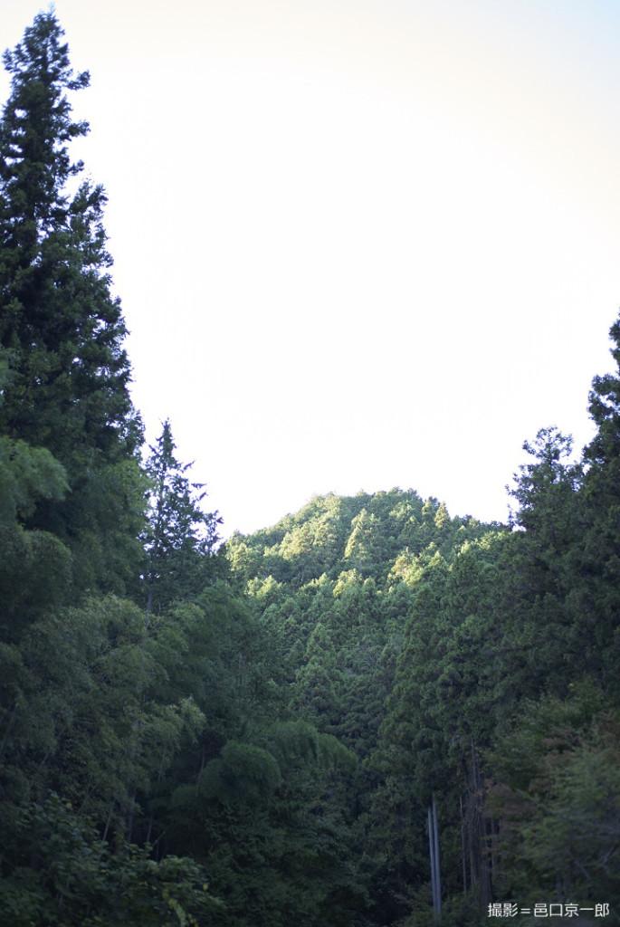 写真②裏山