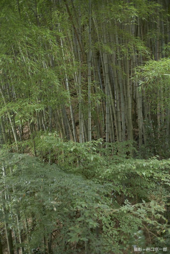 写真⑥竹林