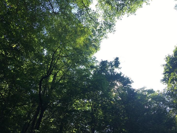 軽井沢の木々の緑